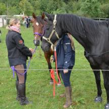 Pferdesegnung-2015-143