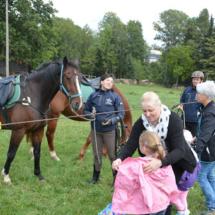Pferdesegnung-2015-144