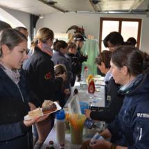 Pferdesegnung-2015-155