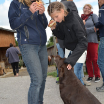 Pferdesegnung-2015-160