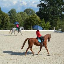 Pferdesegnung-2015-163