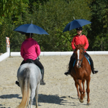 Pferdesegnung-2015-167