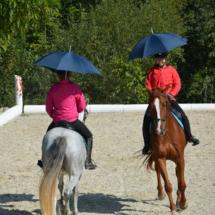 Pferdesegnung-2015-168