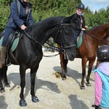 Pferdesegnung-2015-17