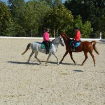 Pferdesegnung-2015-172