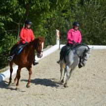 Pferdesegnung-2015-178
