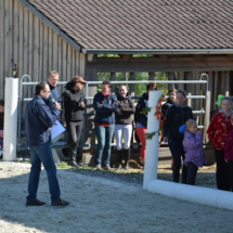 Pferdesegnung-2015-179