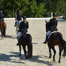 Pferdesegnung-2015-181