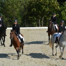 Pferdesegnung-2015-182