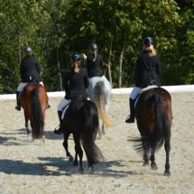 Pferdesegnung-2015-183