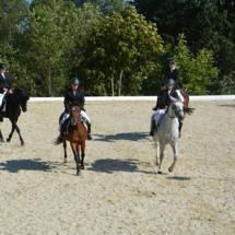 Pferdesegnung-2015-186