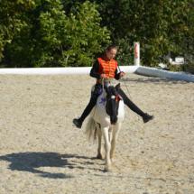 Pferdesegnung-2015-205