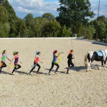 Pferdesegnung-2015-209