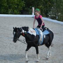Pferdesegnung-2015-217
