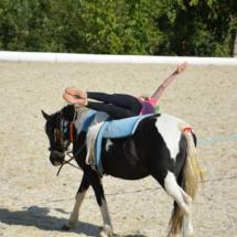 Pferdesegnung-2015-219