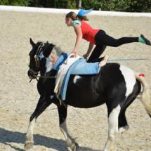 Pferdesegnung-2015-221