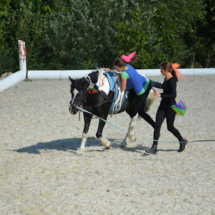 Pferdesegnung-2015-224