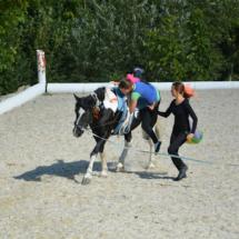 Pferdesegnung-2015-225