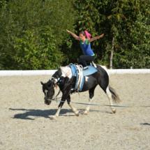 Pferdesegnung-2015-228