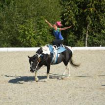 Pferdesegnung-2015-229