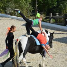 Pferdesegnung-2015-231