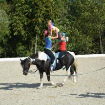 Pferdesegnung-2015-232