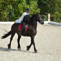 Pferdesegnung-2015-238