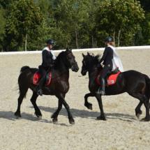 Pferdesegnung-2015-241