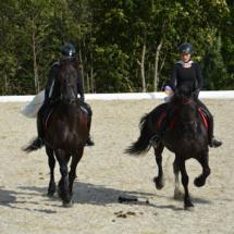 Pferdesegnung-2015-242