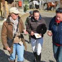 Pferdesegnung-2015-246