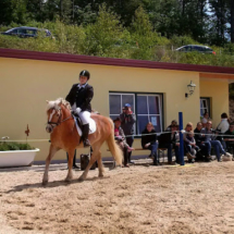 ReiterpassNadel-2014-04